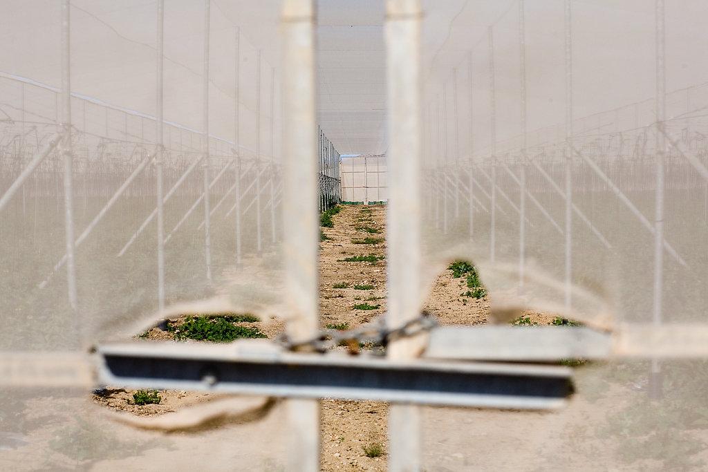 Treibhäuser in Almeria, Spanien
